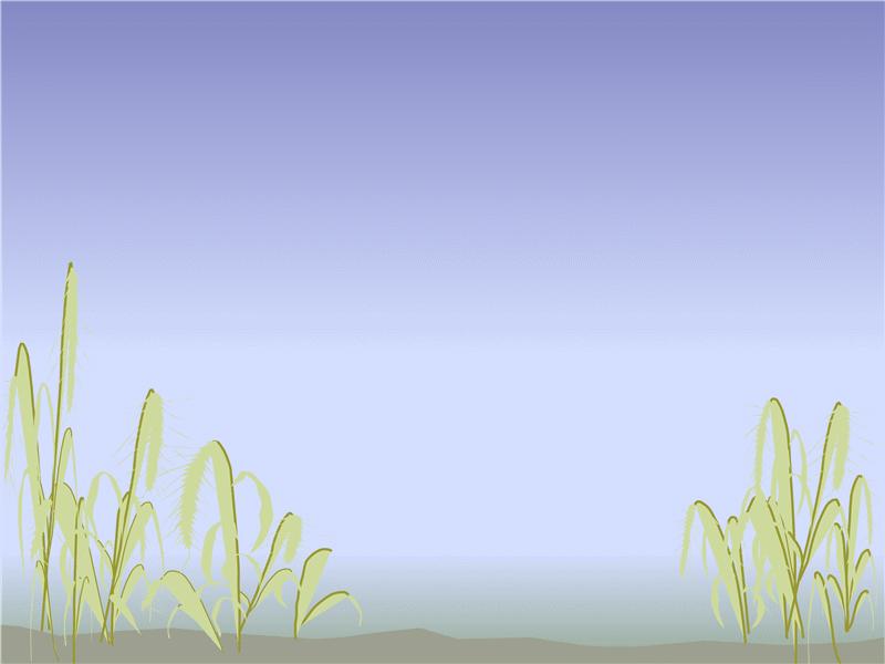 Шаблон «Берег моря»