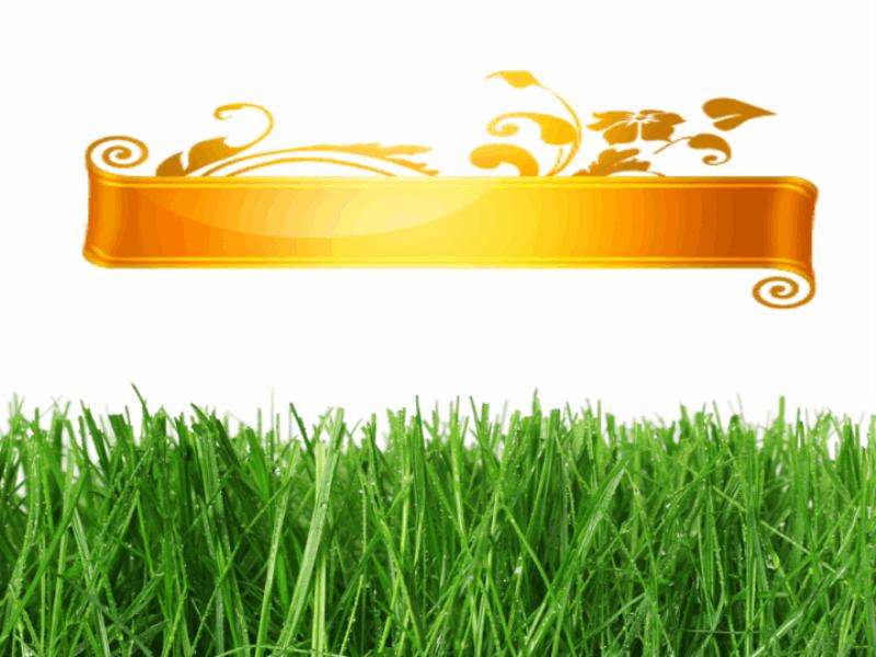 Летний шаблон оформления с зеленой травой