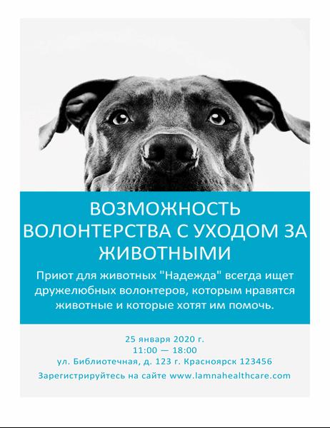 Листовка для волонтеров, желающих ухаживать за животными