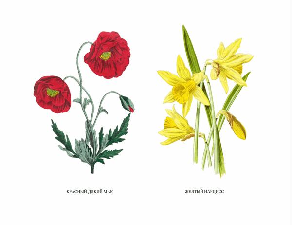 """Набор открыток """"Ботанический сад"""""""