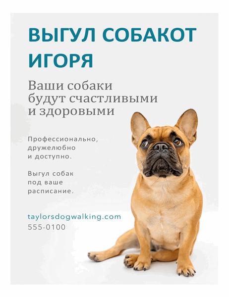 Рекламная листовка для услуг по выгулу собак