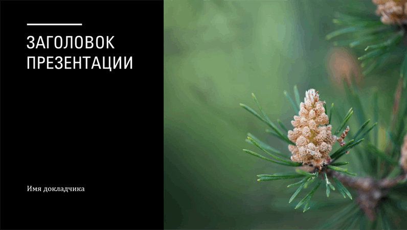 "Оформление ""Хроника"""