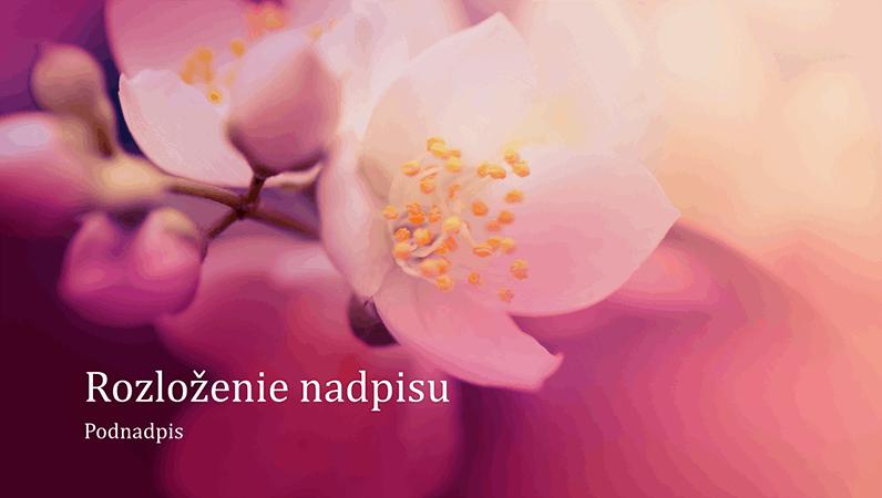 Prezentácia s prírodným motívom čerešňových kvetov (širokouhlá)