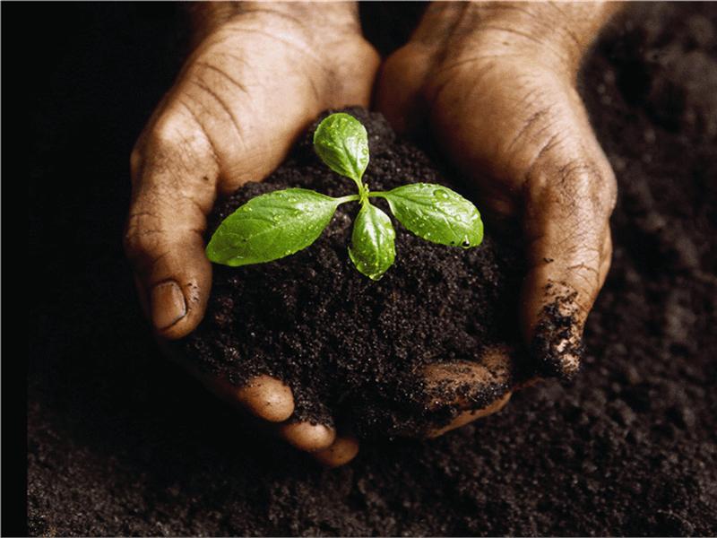 Slajd sa slikom mlade biljke