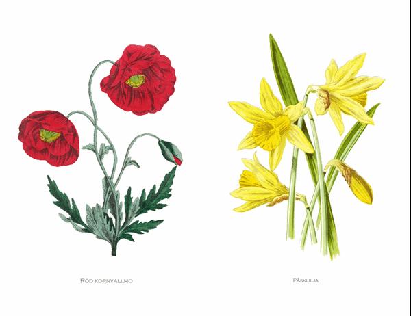 Kortuppsättning med botanisk trädgård