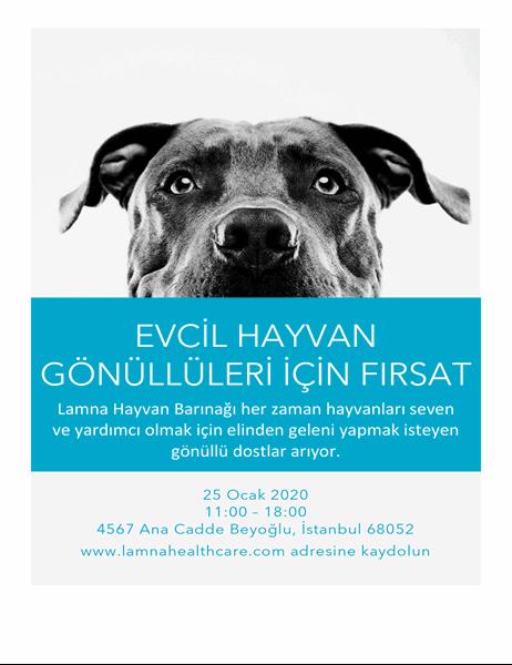 Evcil hayvan gönüllüleri için fırsat el ilanı
