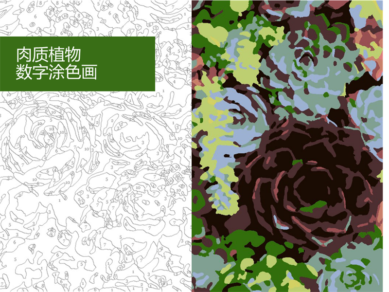 多肉植物数字涂色画