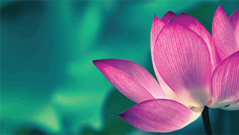 脸书花卉横幅
