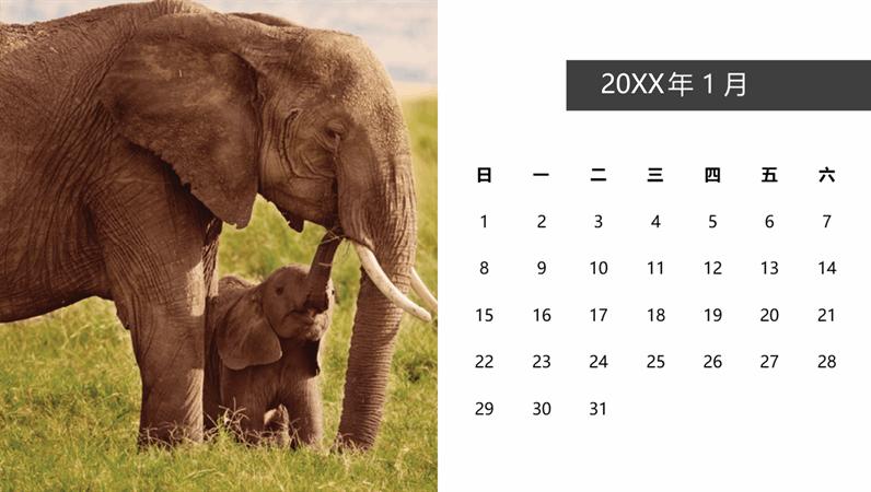 可爱动物照片日历