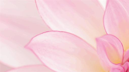 领英花卉横幅
